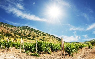 Your self-guided wine tour in your own vehicle